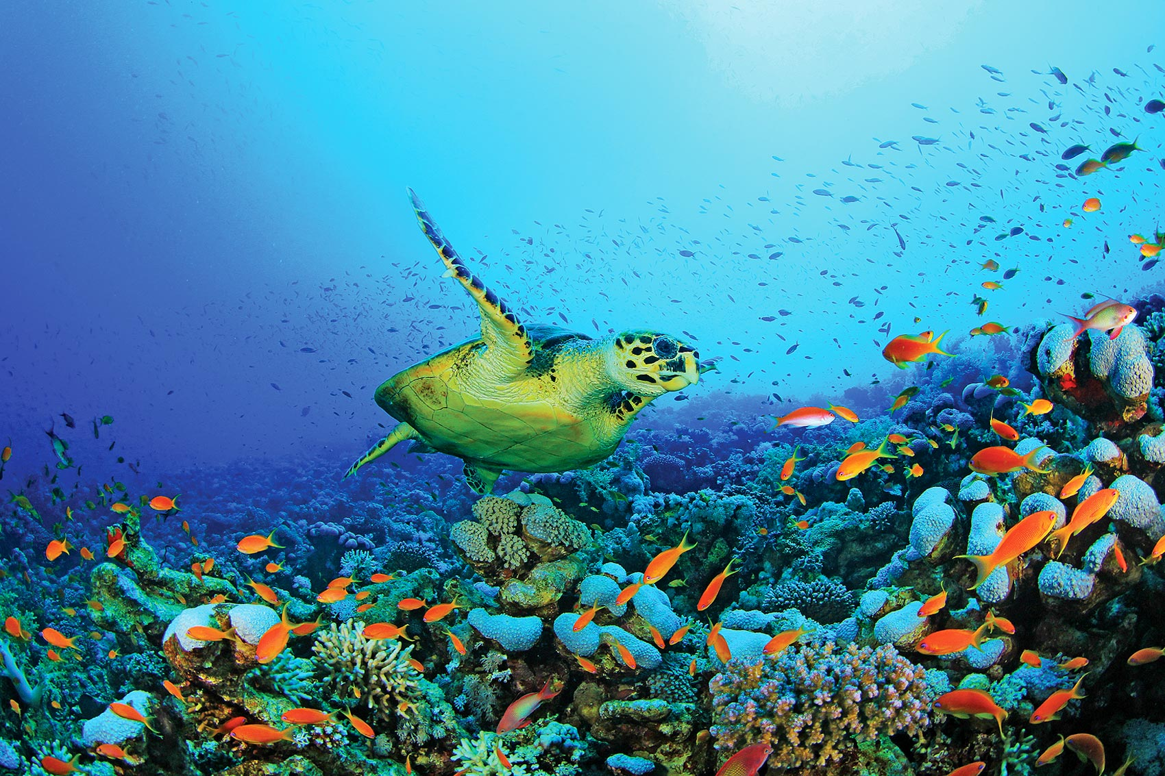 destaque-home-tartaruga